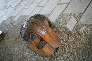 CIOBANU Vlad Compozitie